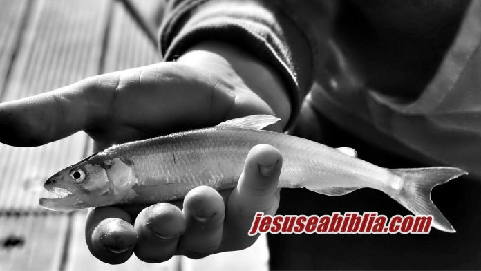 Multiplicação de Pães e Peixes - Jesus e a Bíblia