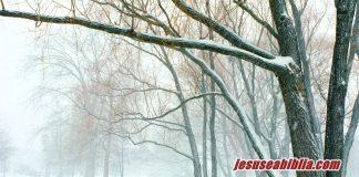 Parábola da Figueira Estéril - Jesus e a Bíblia