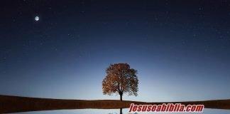 Parábola da Figueira - Jesus e a Bíblia